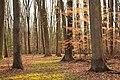 Open Woods (8646349053).jpg