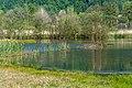 Ossiach Alt-Ossiach Bleistätter Moor Wasserflächen Baumreihen Sumpfwiesen 23052019 6998.jpg