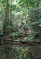 Overbridge rain forest (2720232646).jpg