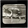 """Pack Ass, """"Prospector's Friend"""" (S2004-908 LS).jpg"""