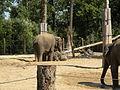 Pairi Daiza enclos des elephants 7.JPG