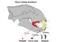 Palaeopopulations of Late Pleistocene Top Predators in Europe (2014) figure 7A3.png