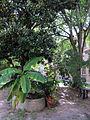 Palazzo paradiso, giardino 03.JPG