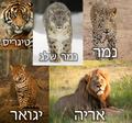 Panthera Collage.png
