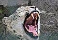 Panthera uncia (33172899150).jpg