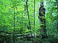 Parc-nature du Bois-de-l-ile-Bizard 10.jpg