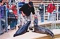 Parc aquarium du Québec - phoques 01.jpg