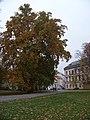 Park Kampa, památný platan javorolistý a Lichtenštejnský palác.jpg