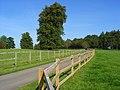 Parkland, Chilton Foliat - geograph.org.uk - 987848.jpg