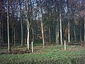 Part of Lodge Wood - geograph.org.uk - 85430.jpg