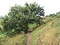 Path, Lyth Hill - geograph.org.uk - 1614194.jpg