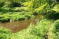 Path by the Minnowburn near Belfast - geograph.org.uk - 1314318.jpg