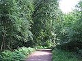 Path in Epping Forest - geograph.org.uk - 2523487.jpg