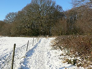 English: Path to Cragg Wood on Christmas Day C...