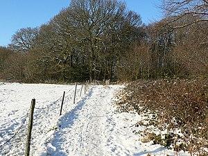 English: Path to Cragg Wood on Christmas Day C...