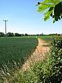 Path to Maypole Green - geograph.org.uk - 1335238.jpg