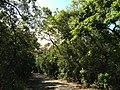Pathway - panoramio (8).jpg
