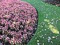 Peace Arch Park gardens (15140672489).jpg