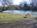 Pelicans in St James's Park London - geograph.org.uk - 1743477.jpg