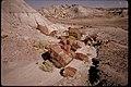 Petrified Wood at Petrified Forest National Park, Arizona (22d5629c-b1a9-4189-9cf5-0503664b4d24).jpg