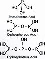 Phosphorous Acids.jpg