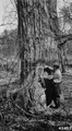 Photograph of Cottonwood Trees - NARA - 2129625.tif