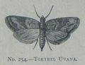 Picture Natural History - No 254 - Tortrix Uvana.png