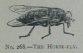 Picture Natural History - No 268 - The Horse-fly.png