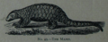 Picture Natural History - No 49 - The Manis.png