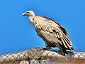 PikiWiki Israel 38863 Wildlife and Plants of Israel.JPG
