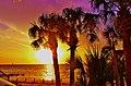Pine Island Hernando Beach Florida United States - panoramio (12).jpg