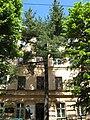 Pinus strobus (Lviv, Ukraine).JPG