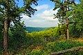 Pitch Pine Loop Trail (1) (21034860600).jpg