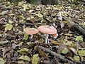 Poland. Konstancin-Jeziorna. Forest 010.jpg