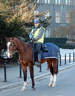 A mounted man in a blue uniform on a dark brown horse