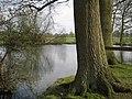 Pond north of Manor Farm - geograph.org.uk - 1805752.jpg
