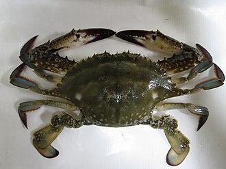 Crab fisheries - Image: Portunus trituberculatus