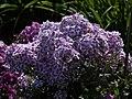 Pražská botanická zahrada - panoramio (10).jpg