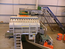 Pro-Pak carrot weigher and bagger.JPG