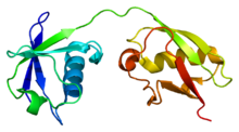 Protein ISG15 PDB 1z2m.png