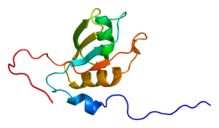 Protein TIAL1 PDB 1x4g.png