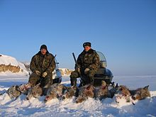 Two men with guns pose behind nine carcasses of hunted wolves