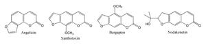 Psoralen - Structures of angelicin, xanthotoxin, bergapten and nodekenetin