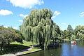 Public Garden Lagoon 11.jpg