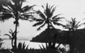 Queensland State Archives 913 Coconut palms c 1931.png
