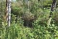 Réserve naturelle Marais Lavours Aignoz Ceyzérieu 78.jpg