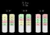 Raid Informatique Wikimonde