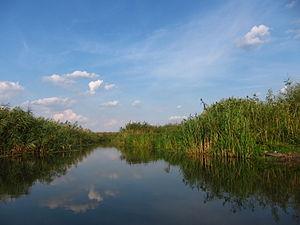 Comana Natural Park - Neajlov River in Comana Natural Park