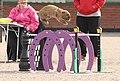 Rabbit Show Jumping - Advanced Class.jpg