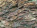 Radiolarian chert, San Simeon state park.jpg